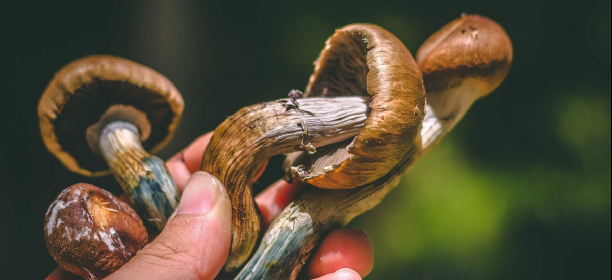 Episode 171: Psilocybin Mushrooms for Mental Health with MycoMeditations